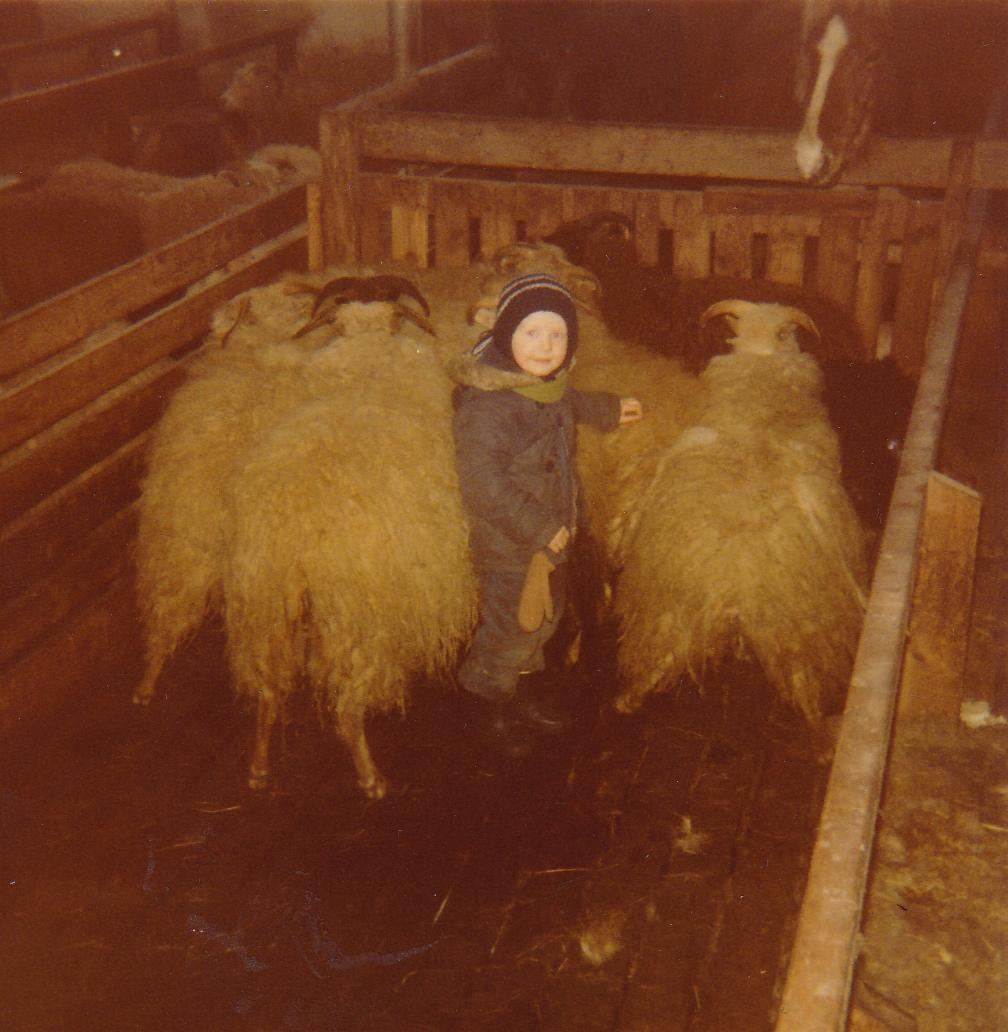 Jökull the young sheep herder